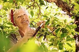 Kirschbaum Richtig Schneiden : kirschbaum schneiden so wird es gemacht das online ~ Lizthompson.info Haus und Dekorationen