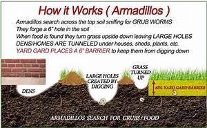 Armadillo Information
