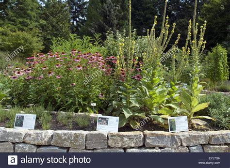 Botanischer Garten München Heilpflanzen by Frankfurt Botanical Garden Stockfotos Frankfurt