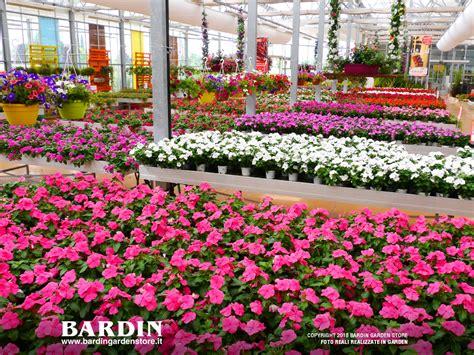 garden fiori e piante piante e fiori vendita piante e fiori garden a villorba