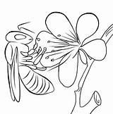 Coloring Honey Bee Yahoo Printable Flower sketch template