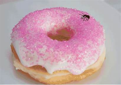 Sugar Ants Bad Donut Rid Why Filters