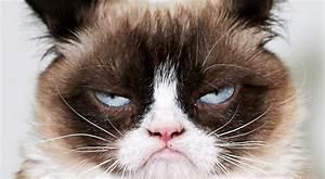 First We Had Grumpy Cat, Now We Have Grumpy Puppy