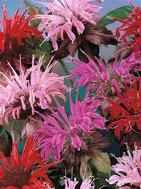 zijn bloemen van munt eetbaar eetbare bloemen en planten