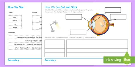 Label Eye Diagram Ks2 by How We See Cut And Stick Activity Sheet Cut And Stick Eye
