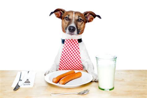dog eating at table how to stop fussy dog eating class for your canine