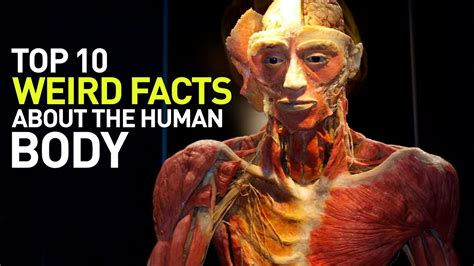 Top 10 Weird Facts About The Human Body Youtube
