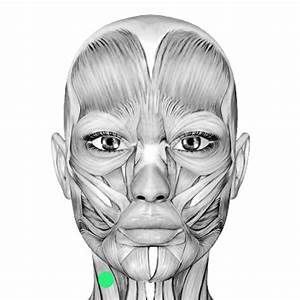 Digitizing Facial Movement During Singing