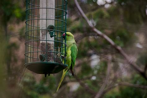 Parrot Feeder by Feral Parrot
