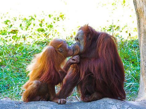adorable animals kissing animals zone