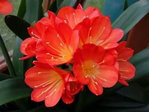 Plante D Intérieur Haute : 10 plantes d 39 int rieur fleuries faciles ~ Dode.kayakingforconservation.com Idées de Décoration