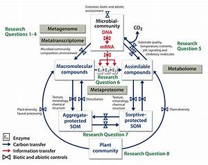 Image: Microbial Communities and Soil Carbon Cycling and ...