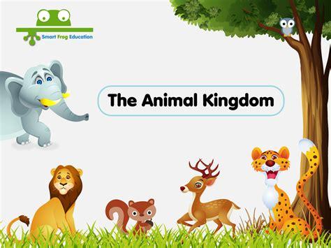 animal kingdom preschoolers the animal kingdom smart frog 51683