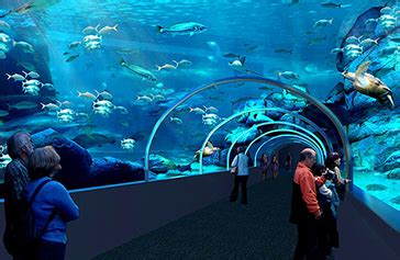 two oceans aquarium at v a waterfront