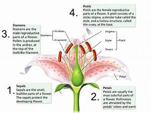 4th Grade Ch  2 Lesson 3 How Do Plants Reproduce