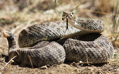 Stay Safe From Snakebites. Here's How.