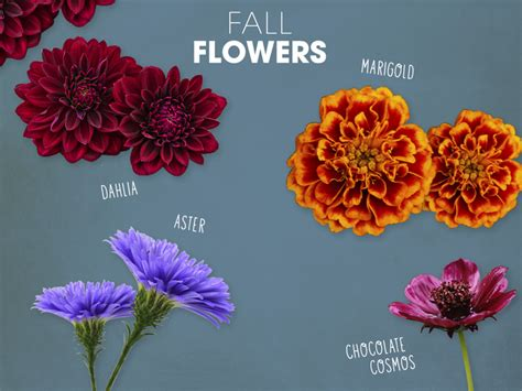 what can you plant in the fall fall flowers 5 flowers to plant this fall century 21 174