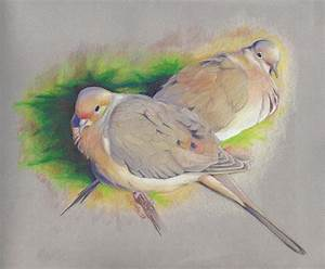 Mourning Dove Pair Drawing by Pam Little