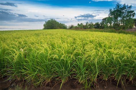 การปลูกพืชไร่และพืชเศรษฐกิจ ชนิดต่างๆ - ALL BIO