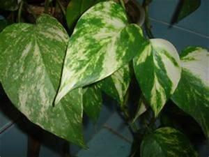 Plante Verte D Appartement : plantes d appartement un petit coin de paradis ~ Premium-room.com Idées de Décoration