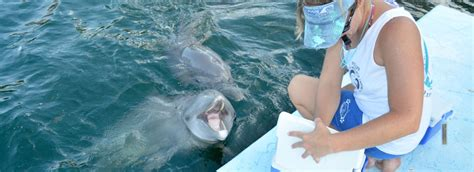 Distance Learning  Marine Mammal Training  Dolphin. Antarctica Trips From Australia. Selling Online Business Austin To San Antonio. California Psychics Ripoff Degree From Devry. Cleaning Services Cape Coral Fl. Best Video Conferencing Solution. Fire And Water Restoration Training. Computer Information Technology Online Degree. Acute Lower Back Pain Treatment