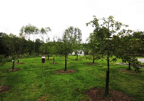 fruit tree orchard  berry patch installation natural