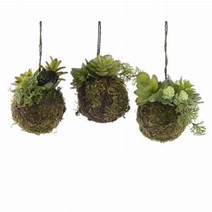 Plantes à Suspendre : plante grasse dans boule mousse a suspendre florimat ~ Premium-room.com Idées de Décoration