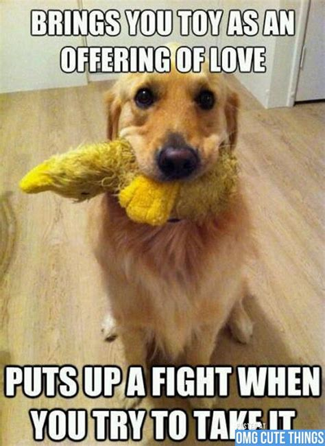 Cute Funny Memes - dog meme 06 cute pinterest funny animal animal and dog memes