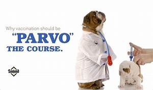 vaccination is key to canine parvo prevention