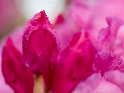 alberi con fiori rosa pianta con fiori rosa fiori di piante pianta dai fiori
