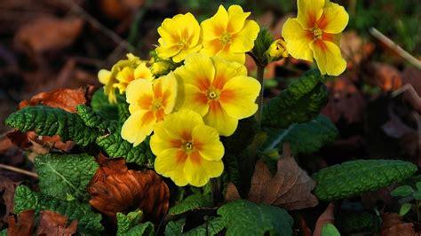 flowers beautiful yellow flowers nature blooms phone