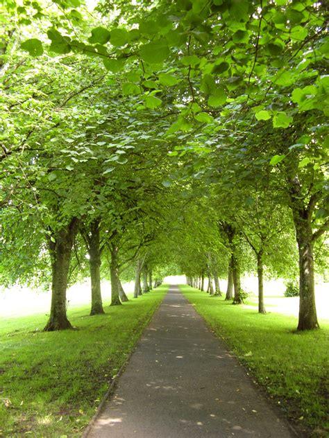 tree lined pathways