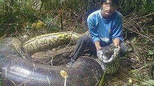 5 Biggest Snakes In The World - YouTube
