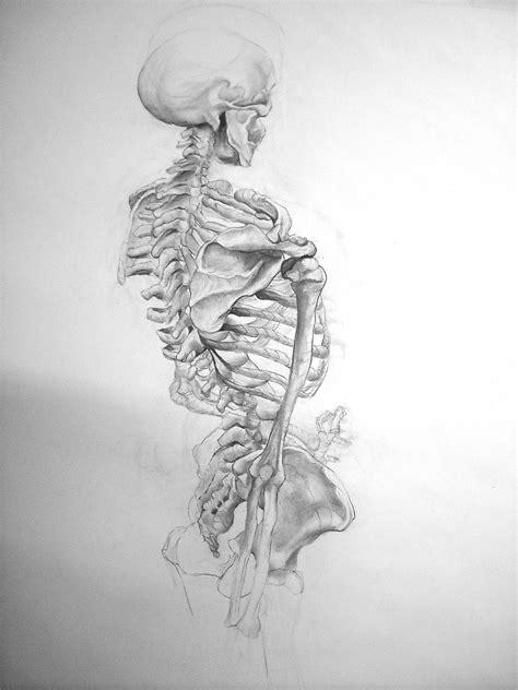 Skeleton Drawing Drawings Pinterest