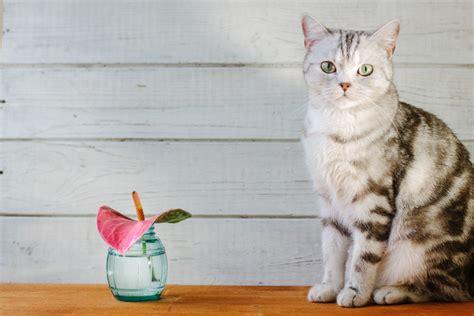 Anthurie » Giftig Für Katzen Und Andere Haustiere