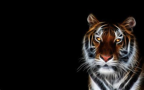 tiger hd wallpapers wallpaper cave