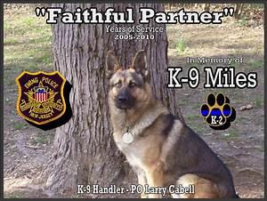 Cute German Shepherd Police Dogs 21 Free Hd Wallpaper ...