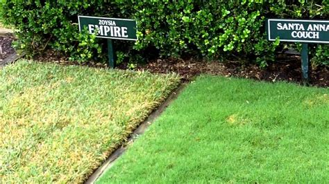 [what Grass Is That] [empire Zoysia] [santa Ana Couch