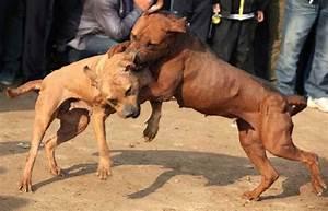 10 Most Cruel Sports Involving Animals