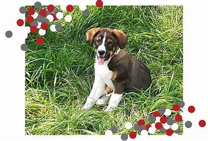 Welpen Laichingen Hundeschule Sie Stressfrei Ihrem Hund
