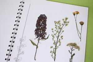 Was Ist Ein Herbarium : ein herbarium anlegen labb blog ~ A.2002-acura-tl-radio.info Haus und Dekorationen