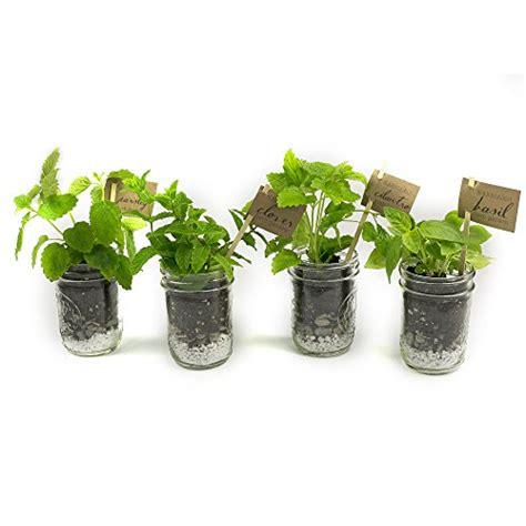 makerskit herb garden gift set basil cilantro