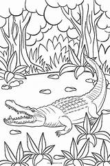 Coloring Pages Alligator Cute Printable Print Crocodile Cool2bkids Baby Getcolorings Getdrawings sketch template