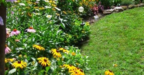 perennial border plants for sun full sun perennial border coneflower shasta daisy rudebeckia homestead pinterest full sun