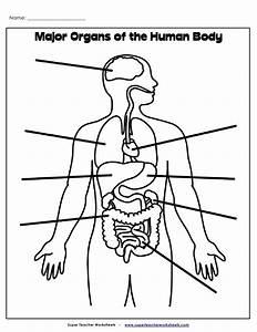 Organs Label