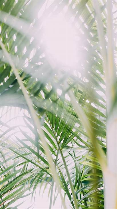 Iphone Nature Wallpapers Palm Plant Backgrounds Leaf
