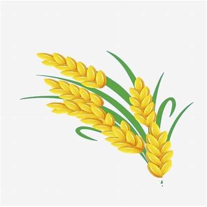 Wheat Clipart Cartoon Crops Rice Golden Clip