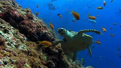 Screensavers Windows Wallpapers Sea Turtle Push Animated