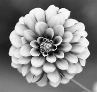 Black and White Photography Flowers