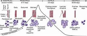 l Cytology Veterian Key